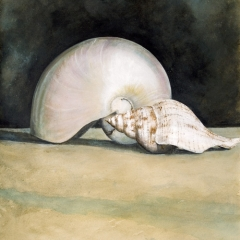 Opposite Shells - 21 x 14 inches - Watercolour